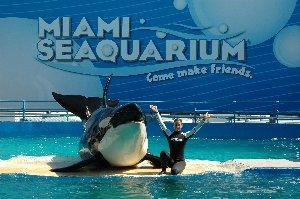 The Miami Seaquarium is a world-class marine-life entertainment park with eight different marine animal shows and presentations. It's a place where dolphins walk on water, a killer whale flies through the air and endangered sea animals thrive.